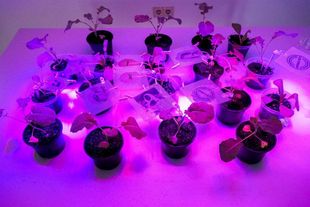 Steirischer Herbst Biodesign Lab