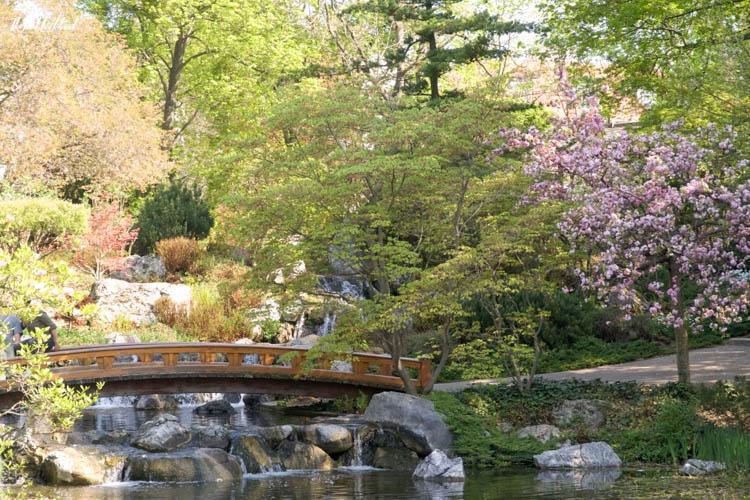 Setagaya Park Bridge Cherry Blossoms Tree