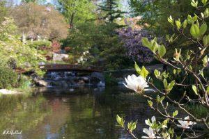 Setagaya Park Bridge Magnolia