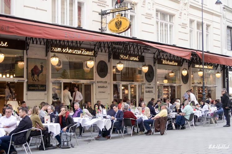Vienna Spring Kameel