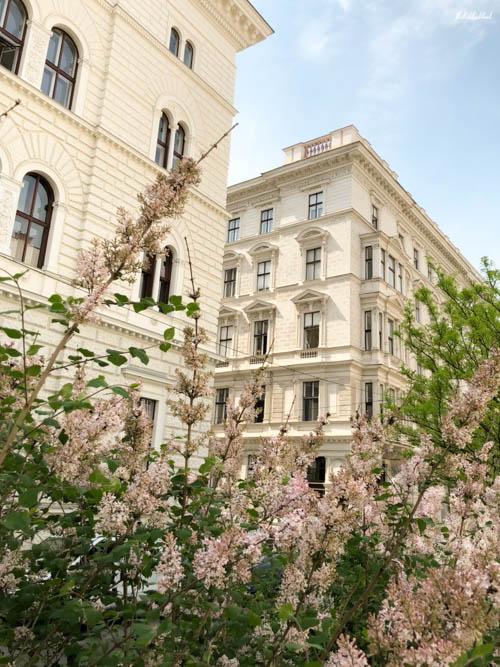 Vienna Spring Universitaet