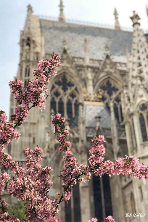 Vienna Spring Votive Church Back