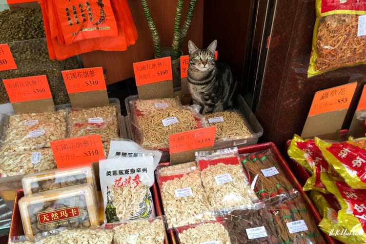 Hong Kong Ultimate Guide All You Need to Know for Your Trip to Fragrant Harbour Sheung Wan Cat