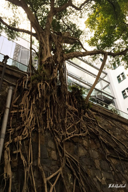 Hong Kong Ultimate Guide All You Need to Know for Your Trip to Fragrant Harbour Tree