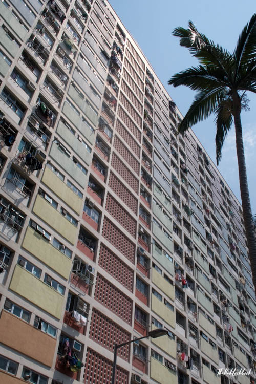My Favourite Hong Kong Pictures Choi Hung Estate Palm Tree