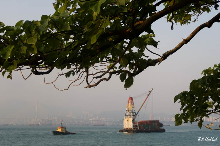 My Favourite Hong Kong Pictures Tree Ships China