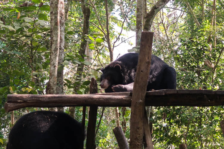 Luang Prabang Kuang Si Waterfall Bear Reserve Bear Chilling