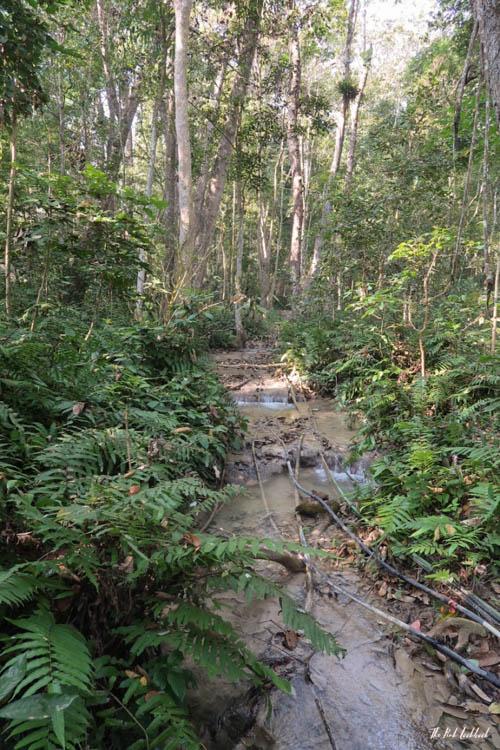 Luang Prabang Kuang Si Waterfall Bear Reserve Jungle