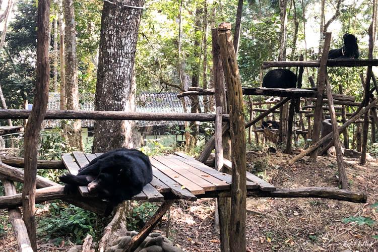 Luang Prabang Kuang Si Waterfall Bear Reserve Sleeping Bears