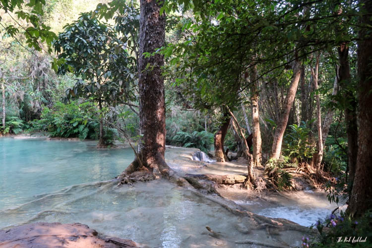 Luang Prabang Kuang Si Waterfall Bear Reserve Tree Water